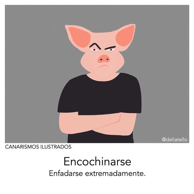 encochinarse - canarismos ilustrados
